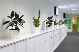 Plants For Office Office Plants Ambius New Zealand