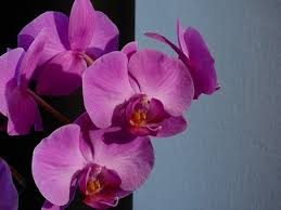 Flower Orchid Purple Orchid Free Pictures On Pixabay