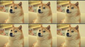Shiba Meme - for the love of doge please do not get a shiba inu