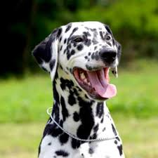12 common dog breeds u0026 health issues