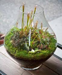 17 terrarium plants that you u0027ll love for your homestead
