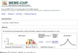 Meme Motif - motif based analysis of large nucleotide data sets using meme chip