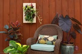 houseplant living wall garden shawna coronado