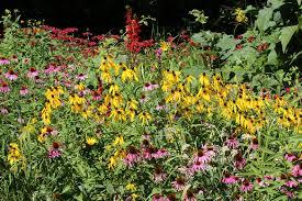 summer flowers back yard biology