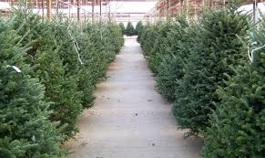 downtown market christmas tree u0026 decor lot classes u0026 events