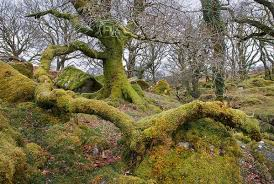 how moss bacteria on trees helps forest growth
