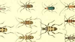 How To Keep Spiders Out Of Your Bed A Guide To All The Bugs Inside Your Bed Van Winkle U0027s