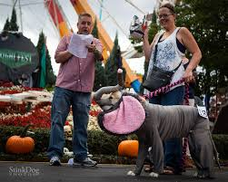pet parade elitch gardens theme and water park