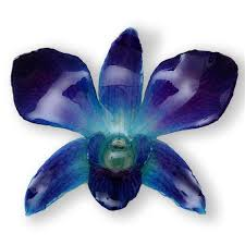 blue dendrobium orchids purple blue dendrobium orchid hairclip hanami jewelry