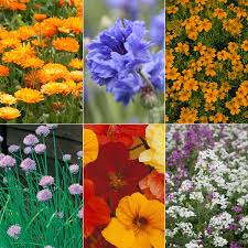 Where To Buy Edible Flowers - buy edible flower petals edible flower petals delivery by crocus