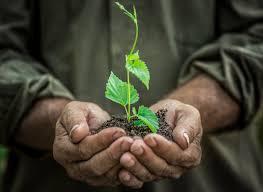 native plant nurseries perth tree planting perth u0026 ground cover plants design supply u0026 install