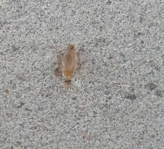 hilfe gegen haushaltsschädlinge vitagate pretty kleine krabbeltiere in der küche images gallery wanted
