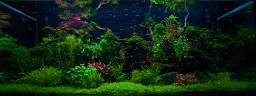 the aquarium design meisterschule a 3 day workshop free of charge