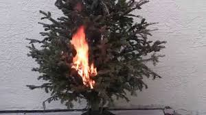 putting out tree fire with 13 5oz cold fire spray can youtube