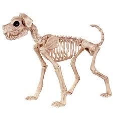 pin by margaret miller on skeleton animals pinterest