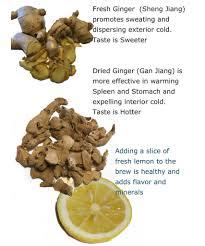 ginger beer plant u2013 real ginger beer plant culture kit