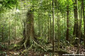 Adaptations Of Tropical Rainforest Plants - plants in the tropical rainforest pictures facts information