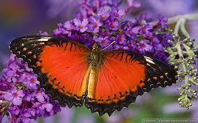 flowers and butterflies wallpapers crazy frankenstein