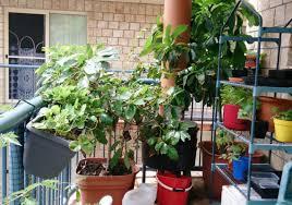 balcony vegetable garden container vegetable gardens growing in