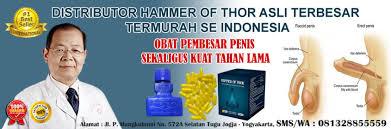 hammer of thor asli di kerinci 081328855559 distributor hammer of
