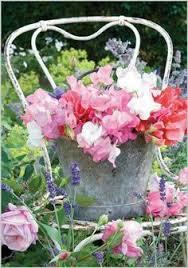 Sweet Pea Images Flower - google afbeeldingen resultaat voor http www thompson morgan com