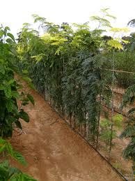 valley trees nursery