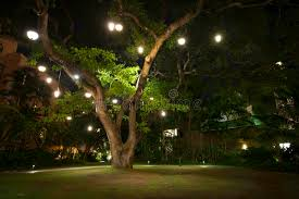 large hawaiian tree with lights on it at stock image image