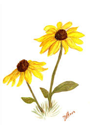 black eyed susan watercolor art u0026 painting pinterest black