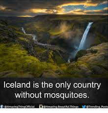 Iceland Meme - iceland is the only country without mosquitoes f amazing