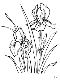 iris flowers coloring pages u0026 coloring book