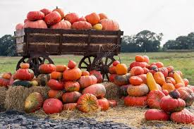 big pile of pumpkins on hay in a wooden cart the season of