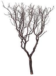 manzanita tree 60 blooms and branches