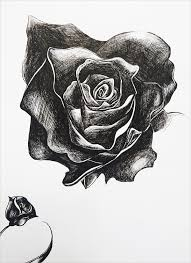 20 rose drawings free psd ai eps format download free