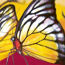 butterfly insect stylised pop art drawing potrait poser drawing