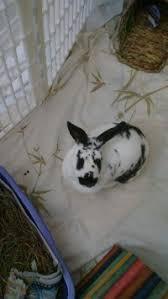 adopt rabbits rescue