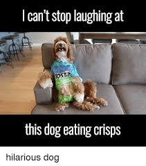 Silly Dog Meme - 25 best memes about hilarious dog hilarious dog memes