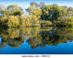 trees in autumn river thames sonning nr reading berkshire