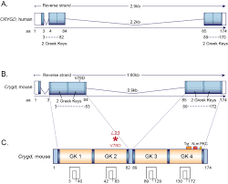 mutagenetix u003e phenotypic mutation u0027l23 u0027