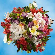 Alstroemeria Alstroemeria Flowers For Sale Global Rose
