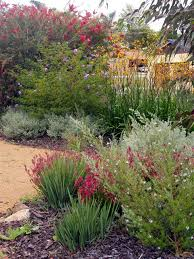 no water gardens wild about gardens garden design perth wa