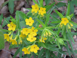 plants native to illinois the wild land of lincoln the greatest desert in central illlinois