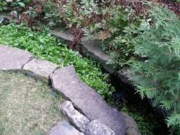 watercress in a decorative stream plants aquaponics and gardens