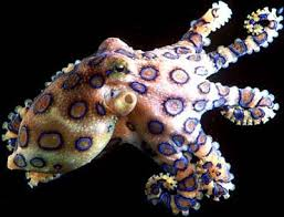 favorite animal the octopus nicole corey u0027s psychology 331 home