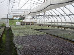 Harmony Greenhouse Transplant Production Decision Tool Leopold Center For