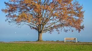 free photo autumn tree lake bench park free image on