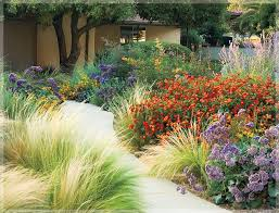 Drought Friendly Landscaping by 197 Best Front Yard Drought Tolerant Landscape Images On Pinterest