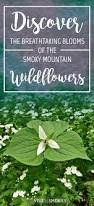 23 Best Wildflowers Of Middle Tennessee Images On Pinterest