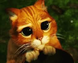 Puppy Dog Eyes Meme - dog eyes gifs tenor