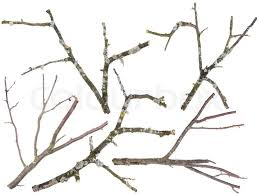apple and cherries tree branches isolated stock photo