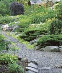 a lush garden on the rocks finegardening